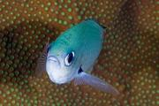 View The Marine Fish (bony) Album