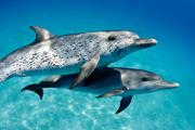 View The Marine Mammals Album