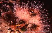 View The Marine Invertebrates Album