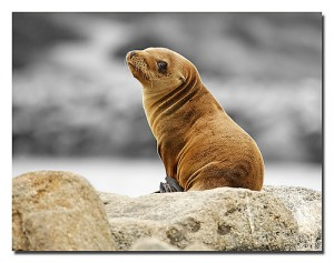 sea lion turned to look