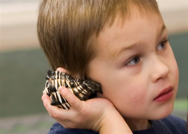 boy with shell up to ear.jpg