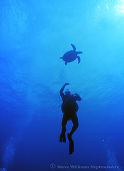 cozumel turtle and diver.jpg