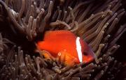 View The Marine Fish (bony) Album