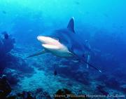 View The Sharks and Related Species Album