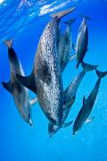 View The Marine Mammals Album