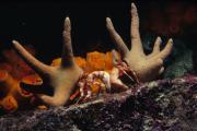 View The Marine Invertebrates Album
